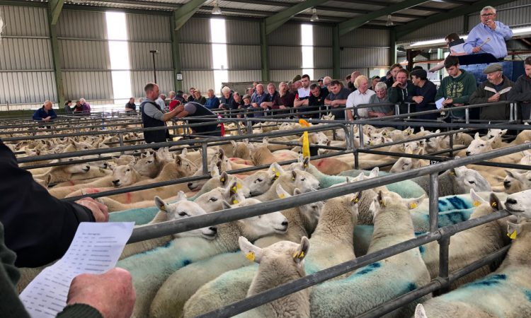 2 further marts approved to read electronic sheep tags; find out which ones…