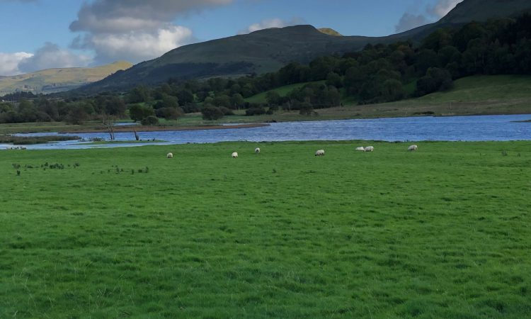 BEAM scheme for sheep is required – ICSA