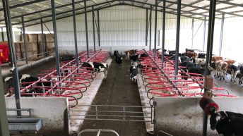 Buildings focus: Milking 28 cows in a brand new indoor robotic-milking system