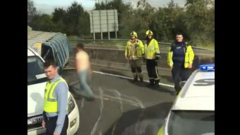 Trailer carrying cattle overturns on motorway