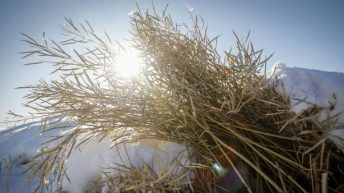 Grain price: Harvest reports show little movement