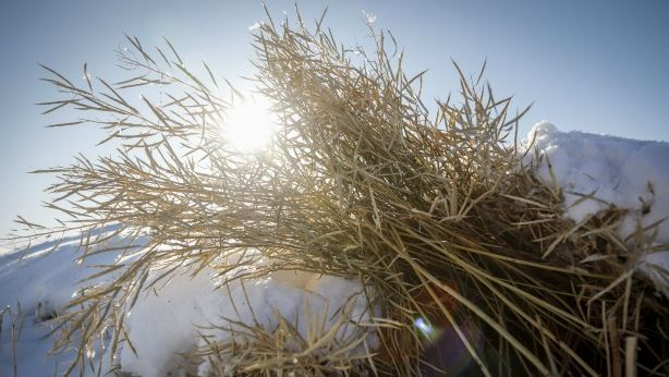 Grain price: Harvest reports show little movement