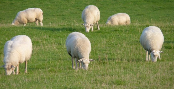It's soon time to start scanning early-lambing flocks