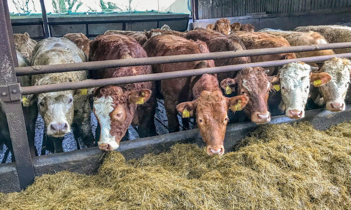 Beef farmers called on to 'hold back cattle' at current prices