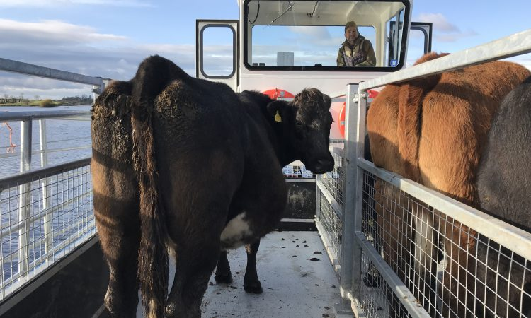 New custom-made 'cot' to carry livestock between islands on Lower Lough Erne