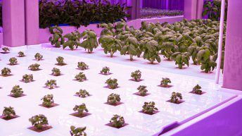 Watch: 5ac of greens in 55m²? No imports…hyper-local food