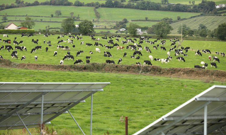 'Farmers are being used as political cover by the IFA' – An Taisce