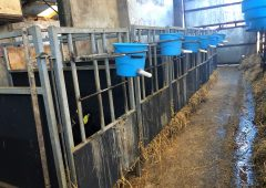 The key aspects of a good calf shed