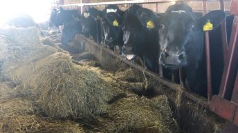 Dairy advice: Feeding minerals and treating parasites