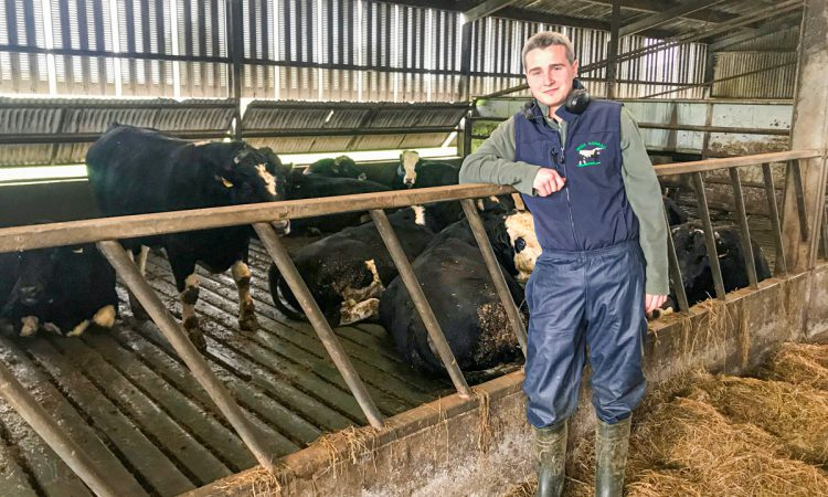 Beef focus: Running a dairy and a 100-head finishing operation in Co. Waterford