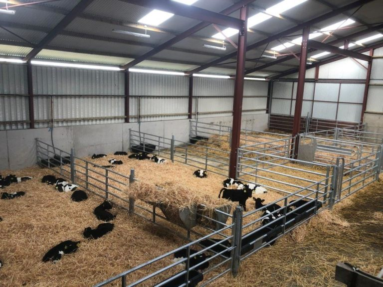 Buildings focus: Converting an old cubicle shed into a calf house
