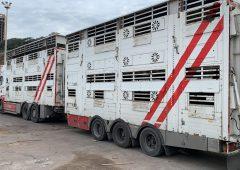 Algerian market 'open for business' as Irish bulls arrive