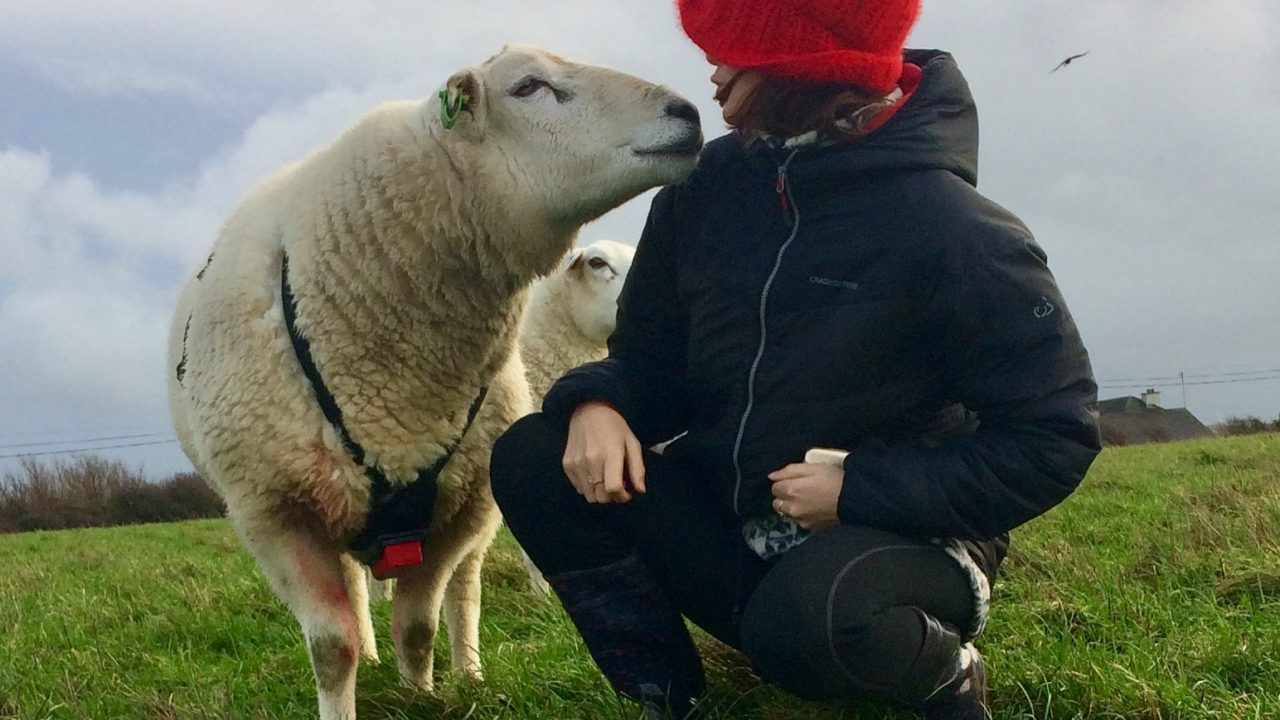 Artist follows seasons of a sheep year in the south-east