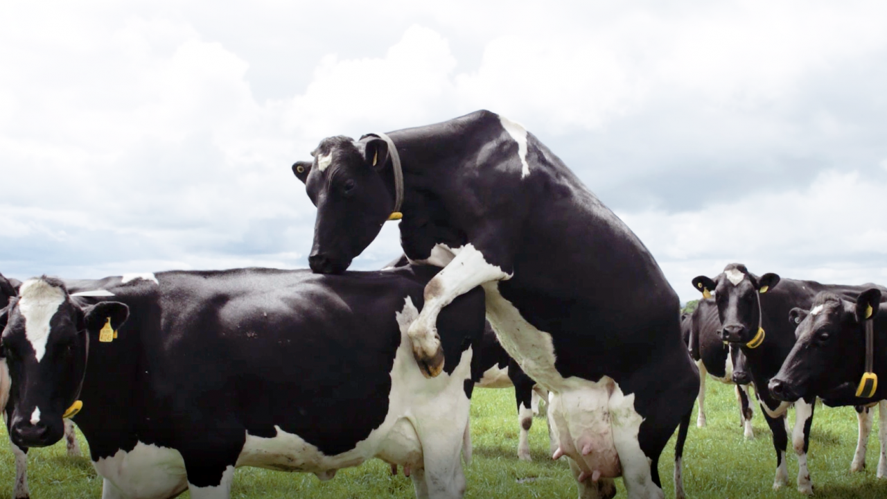 How to increase submission rates in your next breeding season