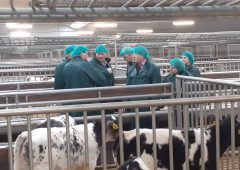 Creed visits Dutch calf farm to promote Irish calf exports