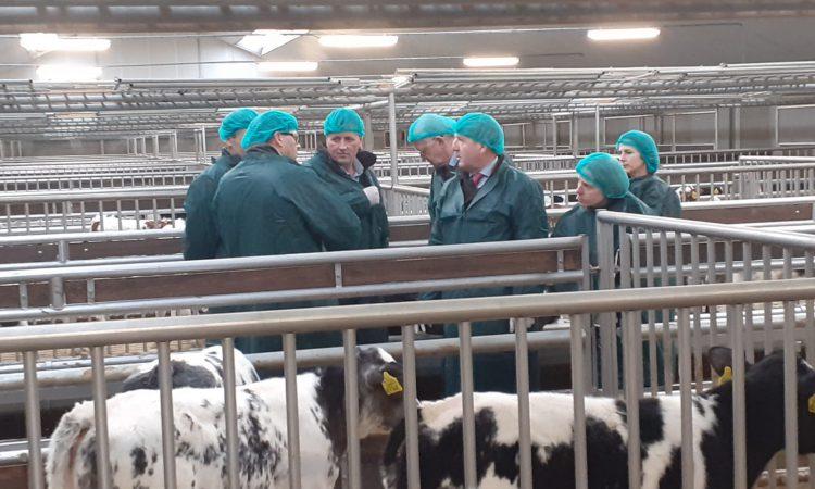Creed visits Dutch calf farm to promote Irish calf exports