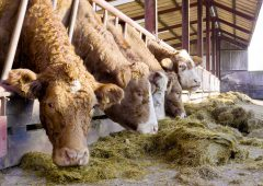 Beef trade: Prices stagnant as 'high supply' of cattle available