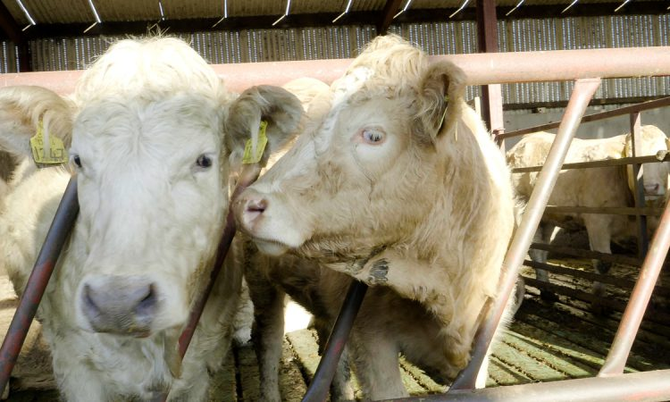 Mart move welcome but more needed for beef farmers – IFA