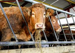 Beef Price Index signifies that farmers 'due an immediate increase' – IFA