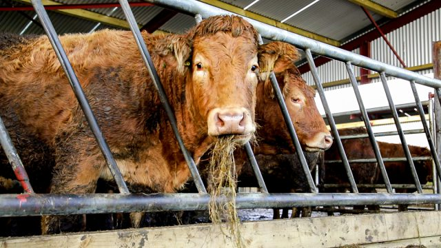 'Beef price increases available as supplies remain scarce'