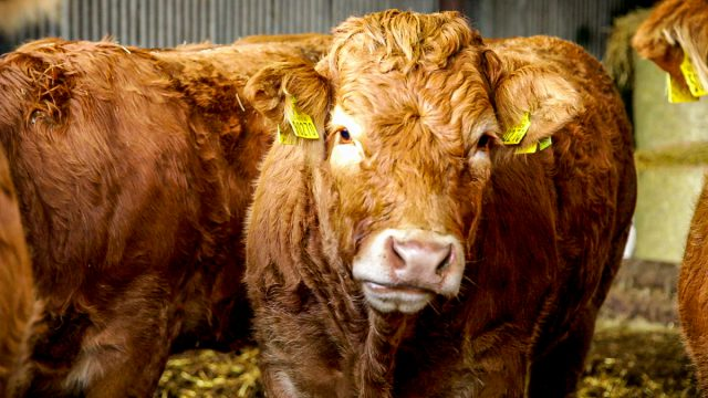 ICSA calls for factory accountability over beef price cuts