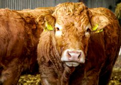 Beef Plan hits out at Goodman warning on exports to China