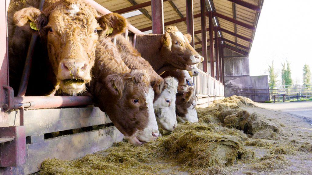 beef price index