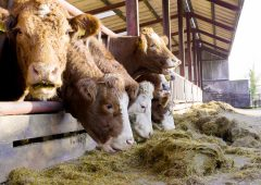 Methane reduction linked to better on-farm profitability