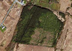 Forest land with potential in Co. Galway up for sale