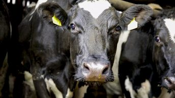 'It's time to act': EU dairy group ramps up calls for supports amid price pressures