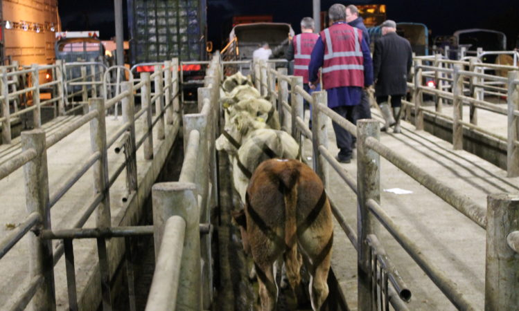 Aurivo announces temporary suspension of livestock sales
