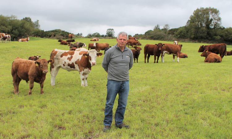 Memo to AgriLand: 'I will not be finishing cattle this winter'