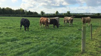 How much grass was grown on Irish farms this year?