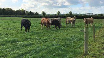 2-hour travel radius in PGI grass-fed beef application 'misinterpreted' – Bord Bia