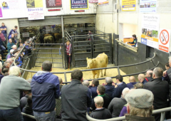 Cattle marts: 'Anything nice is still a good trade regardless of the situation'