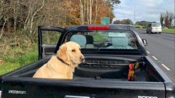 Driver with 'insecure load' in the doghouse with the law