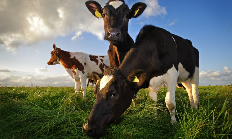 Reduction in emissions in agriculture 'reflects work ongoing at farm level'