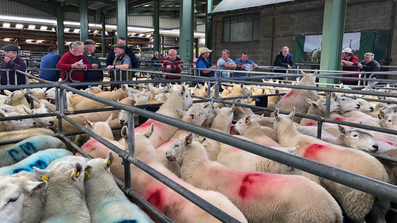 16 further marts approved to read electronic sheep tags