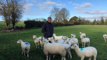 Sheep focus: Breeding pedigree Belclare ewes for the last 30 years in Co. Carlow