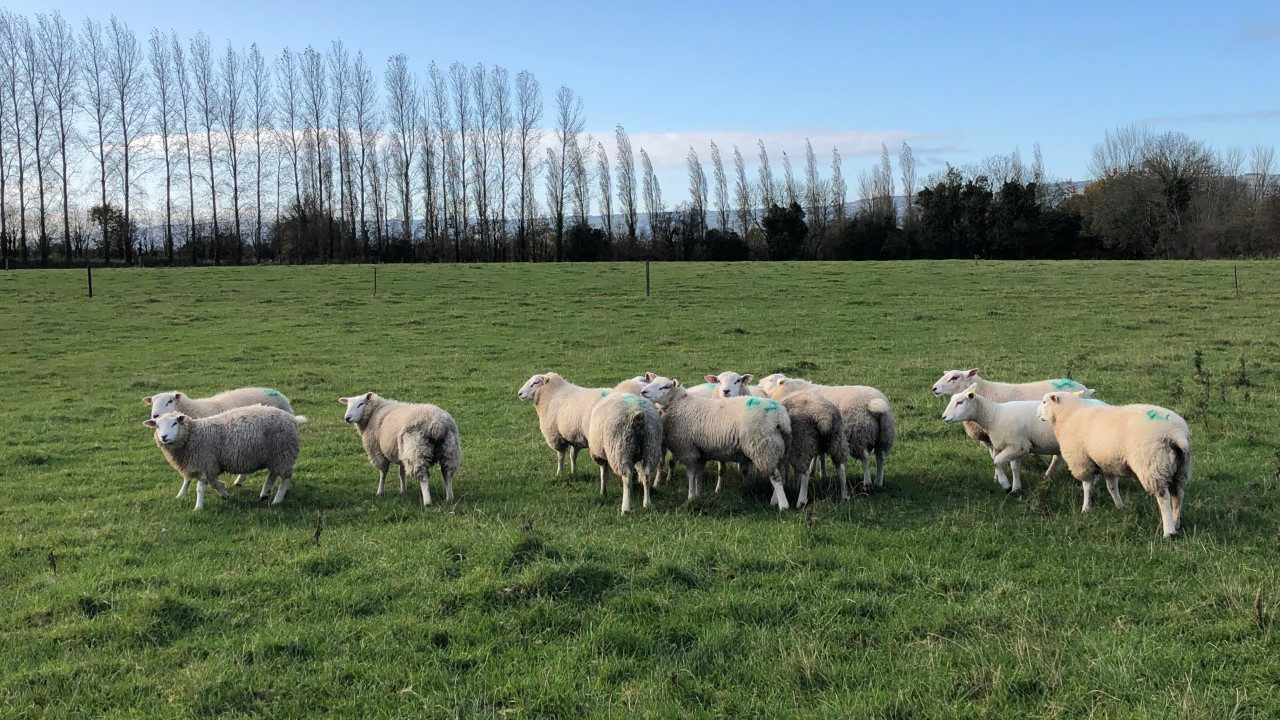 What weight should I be drafting my lambs at?