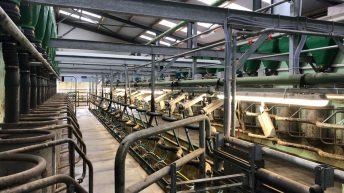Buildings focus: 16-unit parlour and drafting system all under the one roof in Co. Westmeath