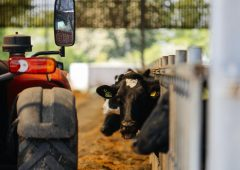 Management tips for the dry cow period