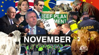 Beef Industry Review: November