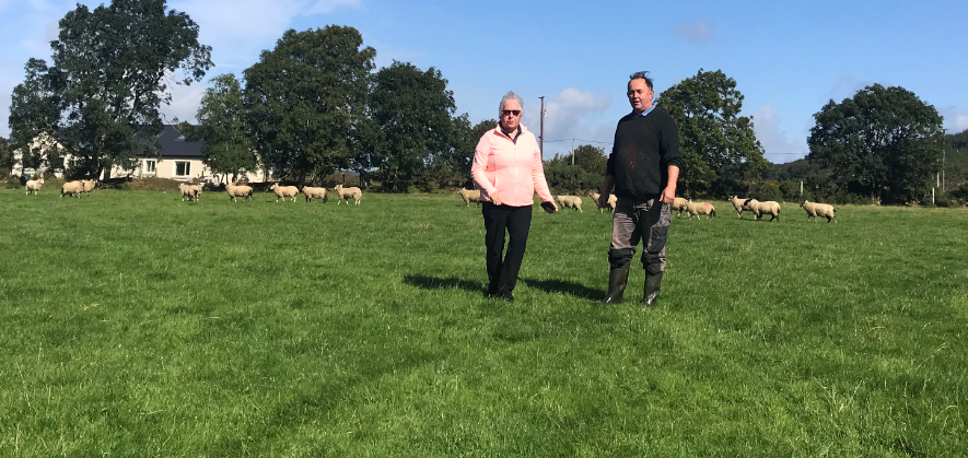 Back in focus: Sheep farming in the heart of the Wicklow Mountains