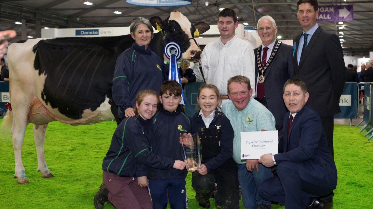 Limerick breeder clinches 2019 RUAS Winter Fair championship