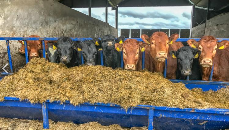 How do Irish heifer prices compare with EU returns?