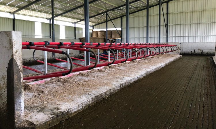 Top tips for preventing new mastitis infections in spring 2020