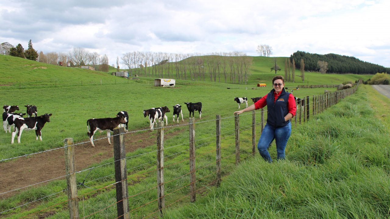 Rearing 500 calves with 2% mortality on a calf unit in New Zealand