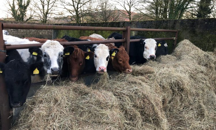 Moves to tighten veterinary controls 'a hammer blow' – ICSA