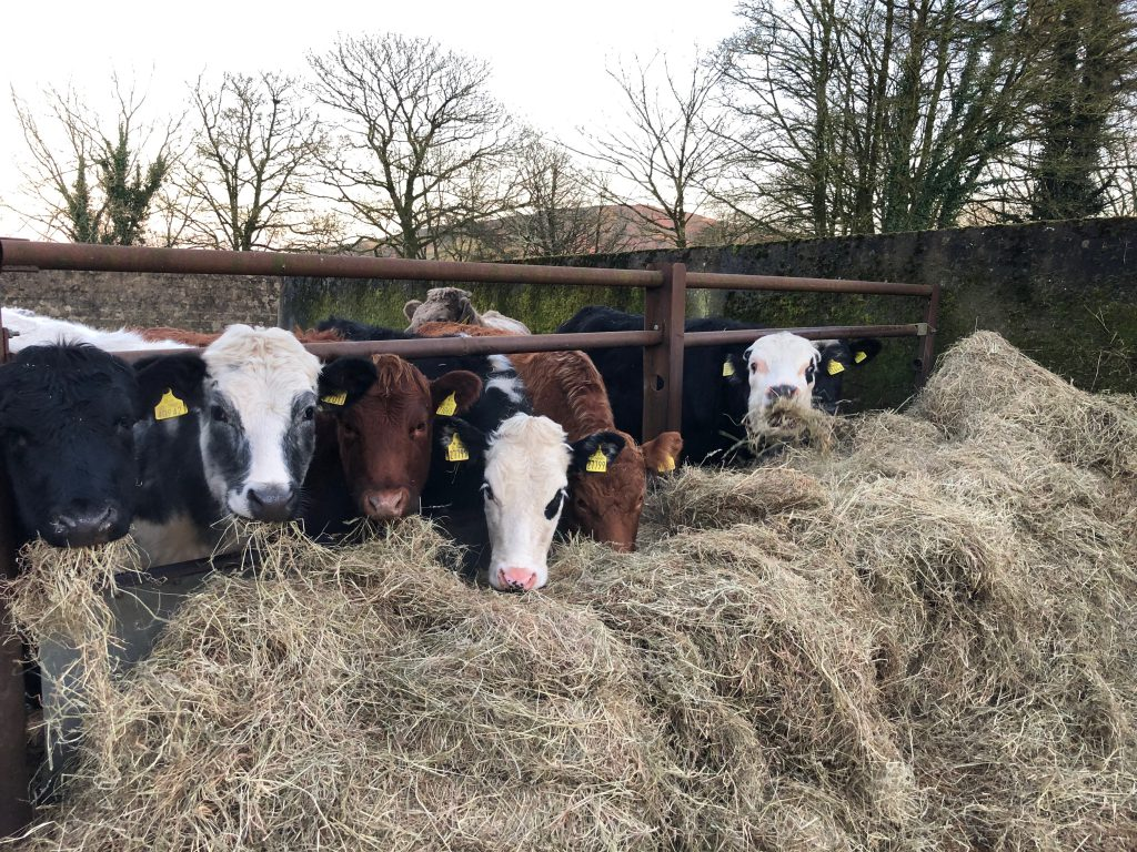 Value of cattle production fell by €104 million in 2019